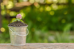 The bucket to the ground and plant on the board.  Royalty Free Stock Photos