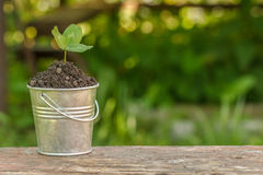 The bucket to the ground and plant on the board Royalty Free Stock Photo