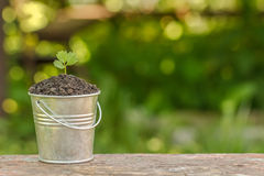 The bucket to the ground and plant on the board Royalty Free Stock Photos