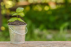 The bucket to the ground and plant on the board Royalty Free Stock Image