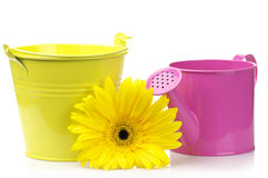 Bucket, watering can and gerbera Stock Images