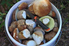 A bucket of white mushrooms stock images