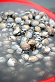 Bucketful of cockles Stock Image