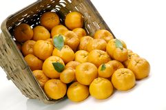 Basket of mandarin oranges Stock Image