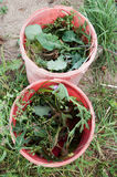 Bucketful of weeds Stock Photography