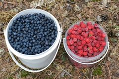 Bucketfuls of wild bilberries and raspberries Royalty Free Stock Photos