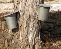 buckets сироп подрыва клена стоковые изображения