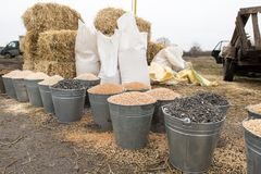 Buckets and bags of grain, bales of hay and straw. Village market of farmers. Barley, corn, wheat, rye, seeds, cake, millet, sorgh. Um stock photography
