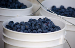 Buckets of blueberries Royalty Free Stock Image