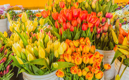 Buckets of Fresh Cut Tulips Stock Photo