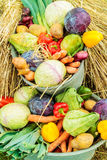 Buckets with organic fresh vegetables Stock Photos