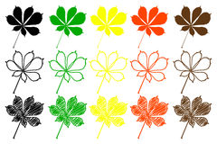 Buckeye leaf color set. Buckeye leaf - color set, buckeye leaf Royalty Free Stock Image