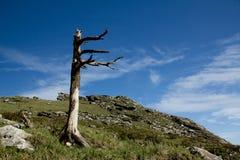 Buckhornen Ridge av det Qinling berget Royaltyfri Foto