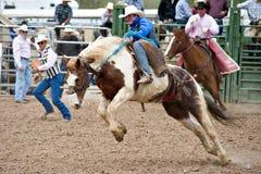 bucking άλογο Στοκ εικόνες με δικαίωμα ελεύθερης χρήσης