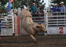 Bucking быка родео Стоковое Изображение