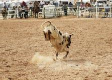 Bucking бык 2 стоковое фото rf