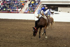 Bucking лошадь Стоковая Фотография