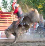 Bucking Blur Action. Rodeo Chesterville, Ontario,Canada weekend of June 19, 2011 Stock Photos