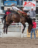 Bucking Bronc - PRCA Sisters, Oregon Rodeo 2011. A professional cowboy hangs on to his bucking bronc at the 2011 Sisters, Oregon Rodeo Royalty Free Stock Photos