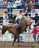 Bucking Bronc - PRCA Sisters, Oregon Rodeo 2011. A professional cowboy hangs on to his bucking bronc at the 2011 Sisters, Oregon Rodeo Royalty Free Stock Images