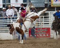 Bucking Bronc - Sisters, Oregon Rodeo 2011 Stock Images