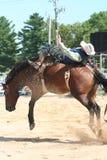 Bucking bronco. Bareback rider rodeo Royalty Free Stock Photos