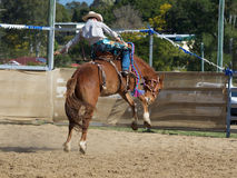Bucking Bronco and Cowboy. Cowboy riding bucking horse at Dayboro Rodeo 2015 in Queensland Australia Stock Images