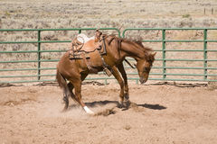 Bucking horse royalty free stock photos