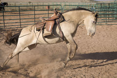 Bucking horse. A horse bucking and kicking in a corral Stock Photos