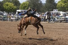 Bucking Horse. Rodeo rider on a bucking horse Royalty Free Stock Photo