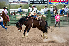 Bucking horse. APACHE JUNCTION, AZ - FEBRUARY 26: A cowboy rides a bucking horse in the saddle bronc competition at the Lost Dutchman Days Rodeo on February 26 Stock Photos