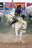 Bucking horse. APACHE JUNCTION, AZ - FEBRUARY 26: A cowboy rides a bucking horse in the saddle bronc competition at the Lost Dutchman Days Rodeo on February 26 Royalty Free Stock Image