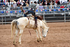 Bucking horse. APACHE JUNCTION, AZ - FEBRUARY 27: A cowboy rides a bucking horse in the bareback competition at the Lost Dutchman Days Rodeo on February 27, 2010 Stock Photos