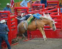 Bucking Horse with Cowboy Coming Out of Gate. A bucking horse with a cowboy coming out of the red gates at the rodeo during the Walworth County Fair in Elkhorn Royalty Free Stock Photos