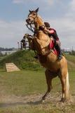 Bucking horse  Stock Photos