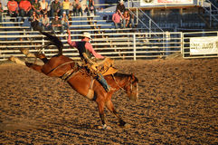 Bucking Horse Rider. This is a picture of a cowboy riding a bucking horse at the rodeo Stock Photos