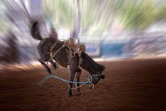 Bucking Horse At Rodeo. Riderless bucking bronco horse at indoor country rodeo, with motion blur Stock Photography