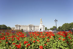Buckingham Palace With Flowers In Foreground Royalty Free Stock Photography