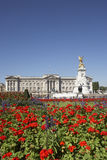 Buckingham Palace With Flowers In Foreground Stock Photos