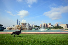 Buckingham springbrunn Grant Park Chicago, USA Arkivbilder