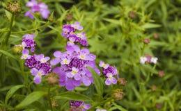 Buckling цветене цветка Стоковое Фото