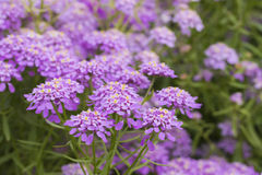 Buckling цветок Стоковое Изображение RF