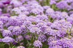 Buckling цветок Стоковые Изображения