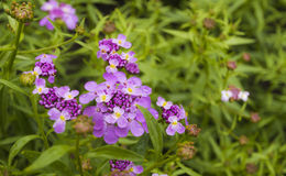 Buckling flower bloom Stock Photo