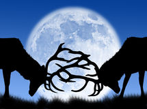 Bucks fight in the moon. Bucks fighting in the night and in the moon Stock Image