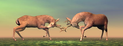 Bucks fighting - 3D render. Fallow buck deer fighting one another in brown and green background light Royalty Free Stock Photography