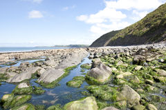 Bucks Mills. Low tide view of the coast at Bucks Mills in Devon Royalty Free Stock Photography