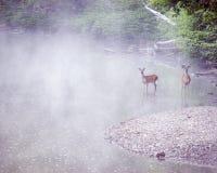 bucks misty ρεύμα Στοκ Φωτογραφία