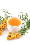 buckthorn τσάι θάλασσας Στοκ Εικόνα