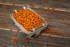 Buckthorn in the basket Stock Photos